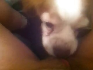 Small Dog Licking